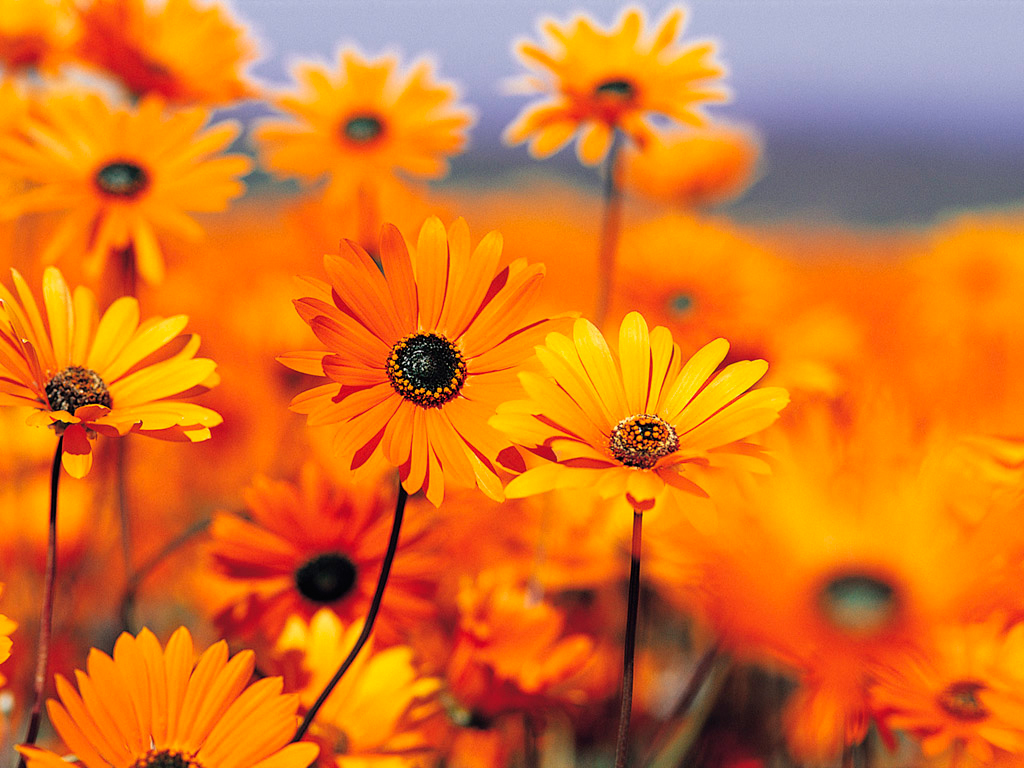 Fall flower girl wedding gallery fall flower garden september annuals for a beautiful izmirmasajfo Image collections